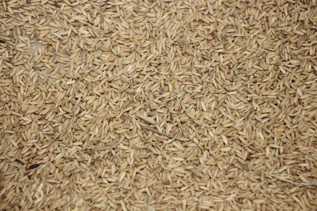 Uncooked Brown Rice, Brown Rice