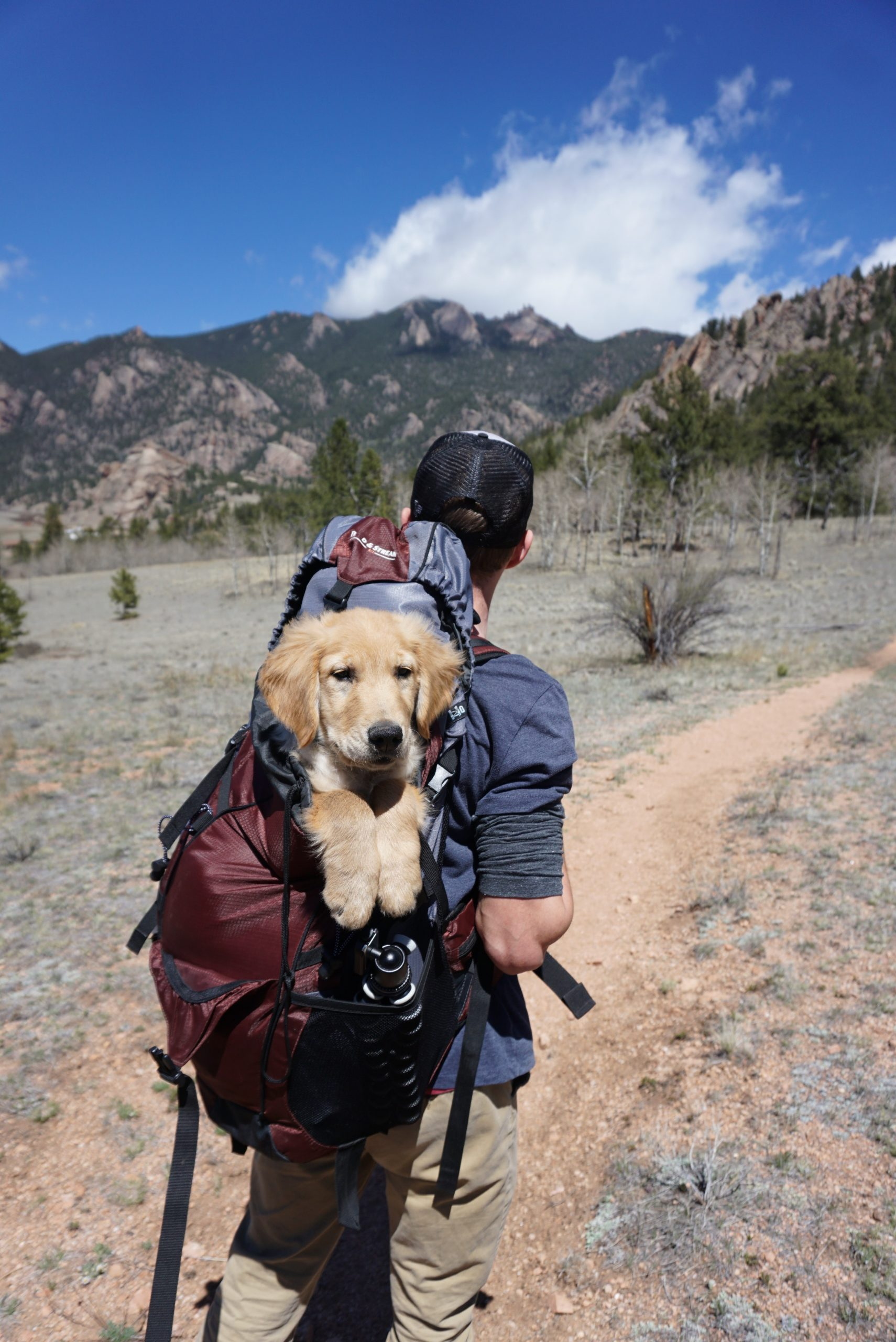 man hiking on a trail with a golden retriever puppy in his backpack, coping strategies, healthy coping mechanisms