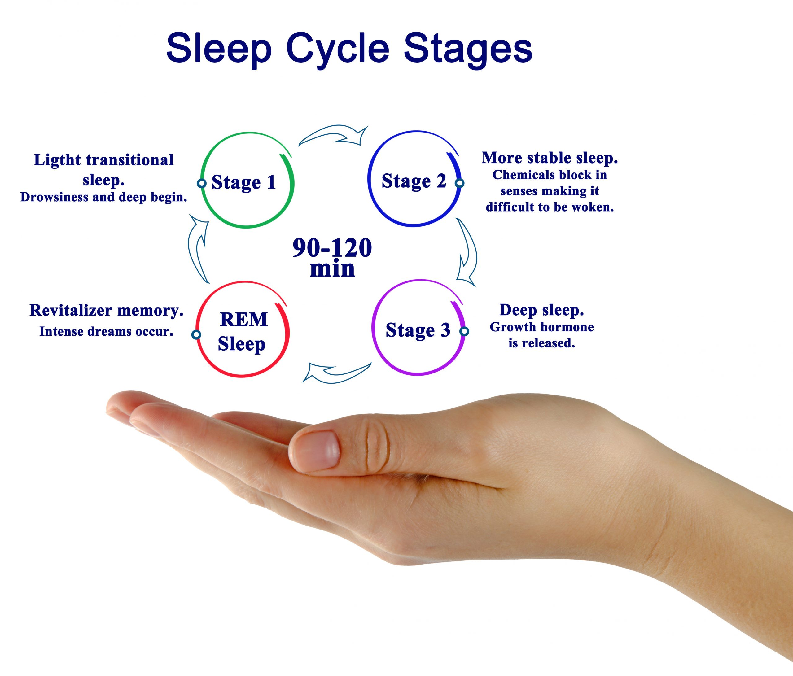 graphic of a person's hand showing the sleep cycle stages