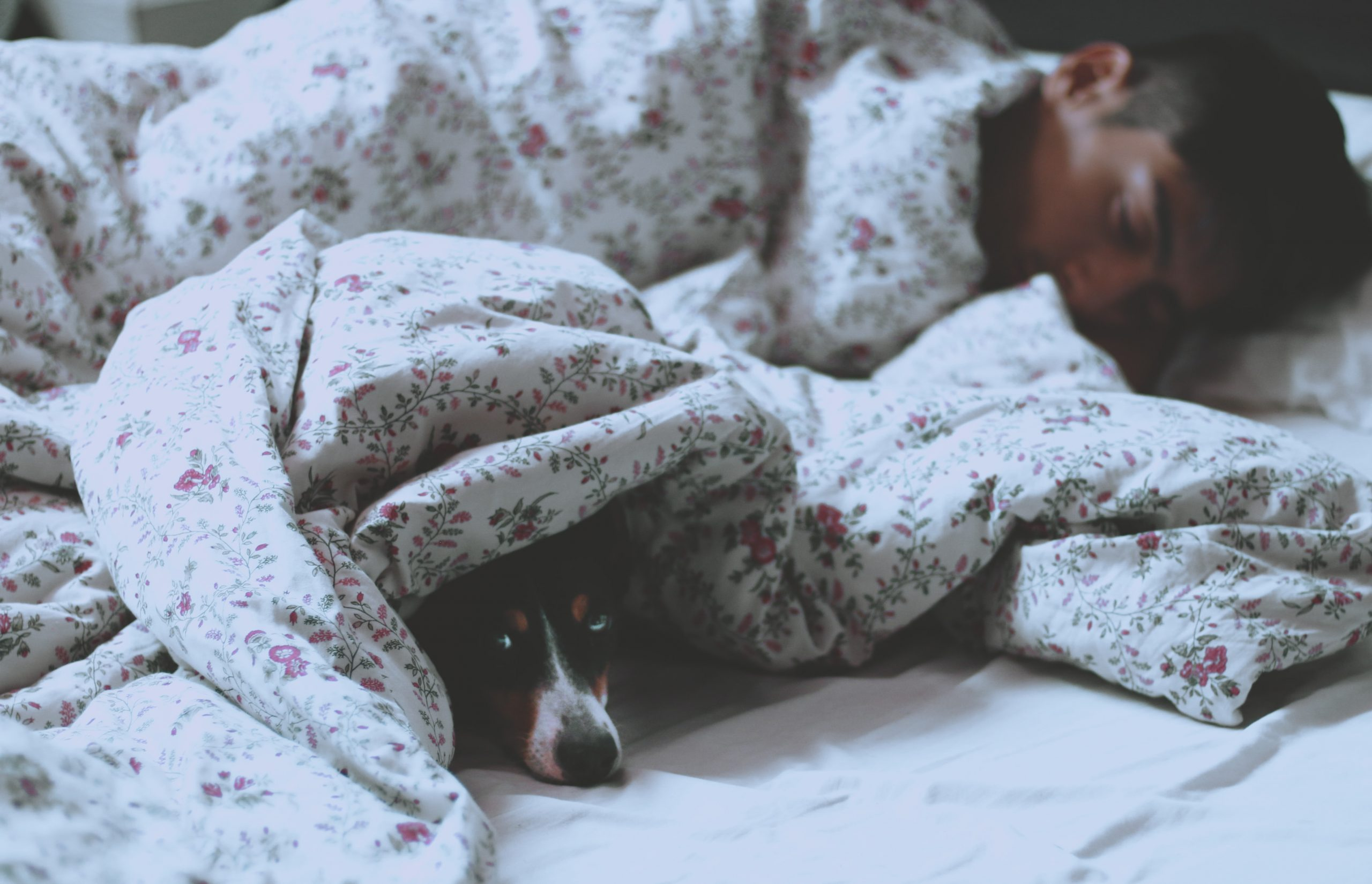 man sleeping with a dog peeking out from under the blanket